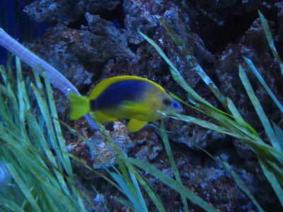 Newport Aquarium July 2007