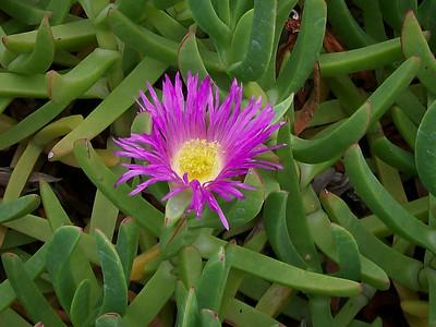 2009 Oct. Hawaii Flowers