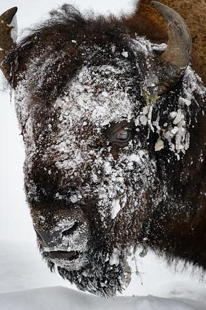 Yellowstone National Park - Winter 2017