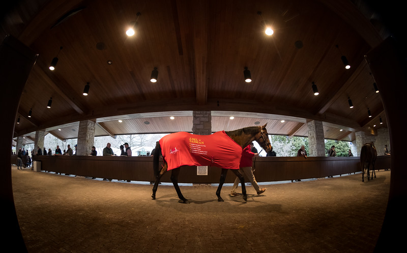Abel Tasman walks in the back sales pavillion at Keeneland before going into the sales ring, 01.07.19