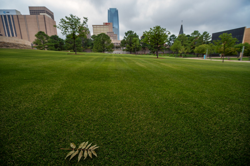 August 7, 2017:  A single leaf lies on the freshly mown grass of the Rescuers' Orchard at the Oklahoma City National Memorial Museum, site of the April 19, 1995 bombing of the Alfred P. Murrah Federal Building in Oklahoma City, Oklahoma.