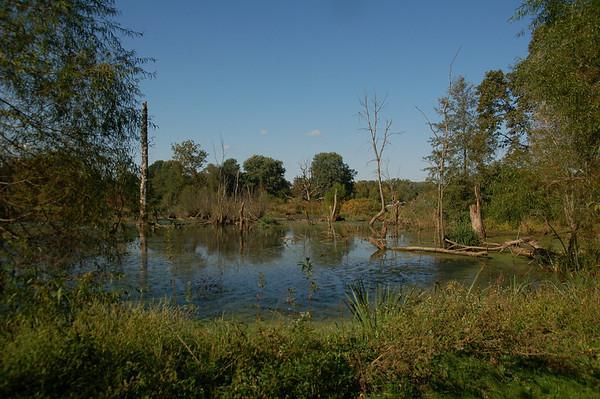 Morris Arboretum Wetland