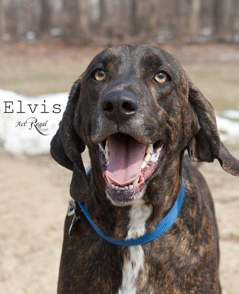 Elvis_3085 copy.jpg