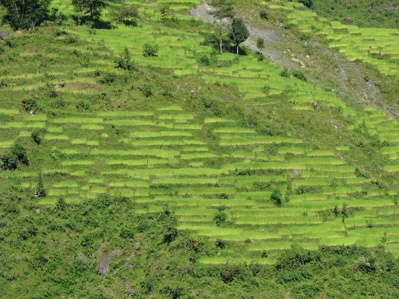 Nepal-248.jpg