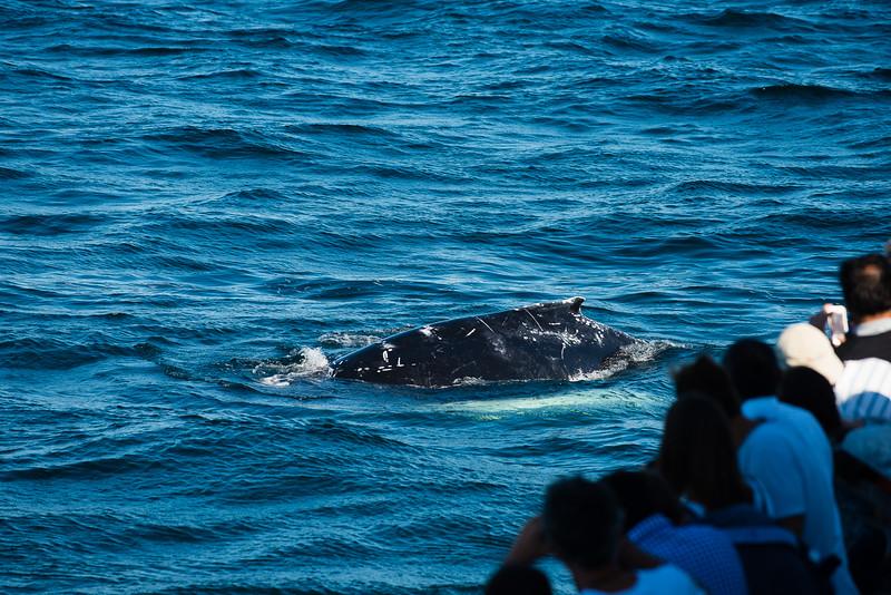 Humpback Whales Plume-1-7.jpg
