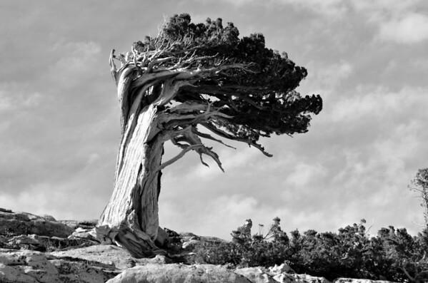 Gallery: Arboretum