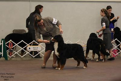 6-9mo Puppy Dog