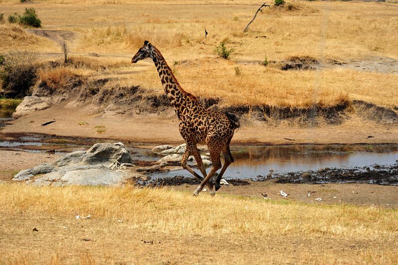 Africa 2010-053.JPG