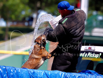 2013 Desert Dog Police K9 Trials (Scottsdale, AZ.)