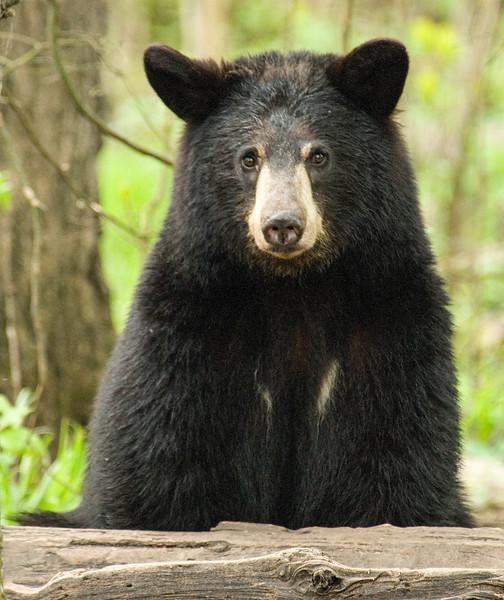 Bears-47.jpg
