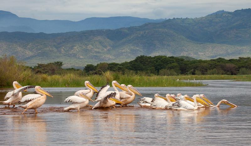 Lake Chamo, Rift Valley, Ethiopia.
