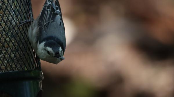 11 Sept 2021 Falssie Birds