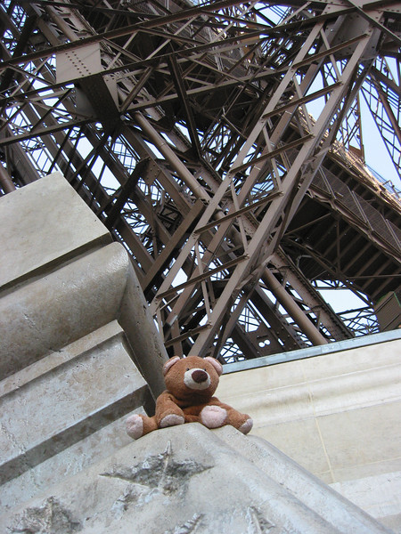Brown Bear at the foot of the Eiffel Tower