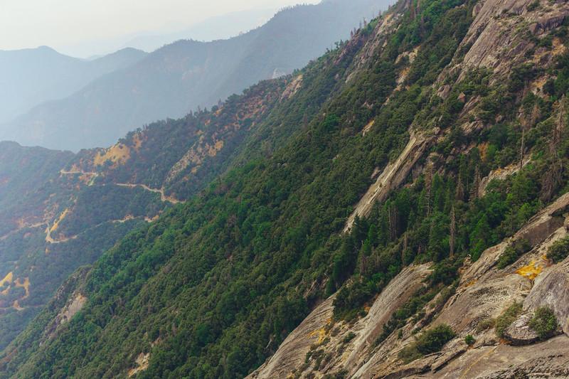 Rui in Sequoia-07080.jpg