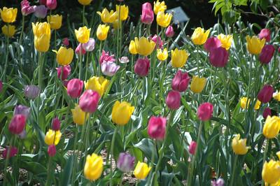 Lilac Park 2012