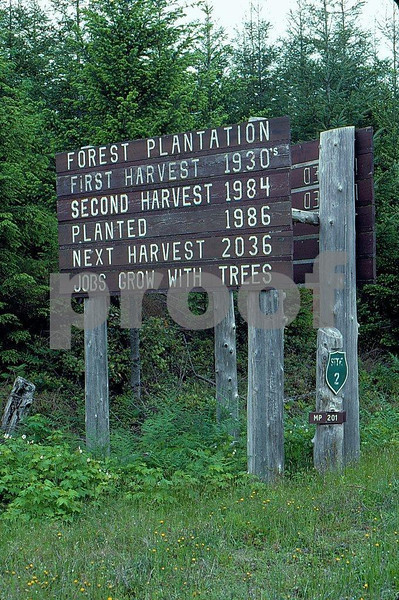 Reforestation dates on a forest plantation located along Highway #101, Olympic Peninsula, WA state.