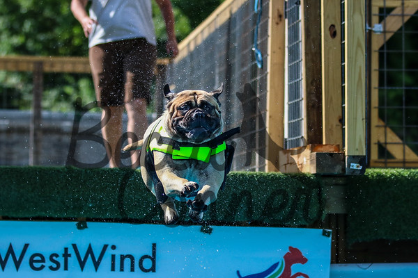 WestWind Diving Dogs