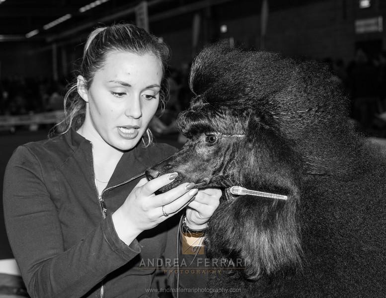 Coiffeur  - Esposizione internazionale canina Modena gennaio 2016 - (71)