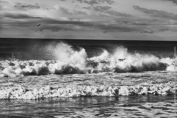East Hampton (BW) 2014