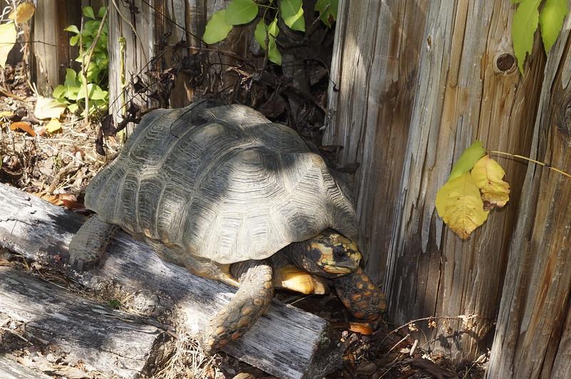 Pine_Tree_Hill_Wildlife_Rescue (142).JPG