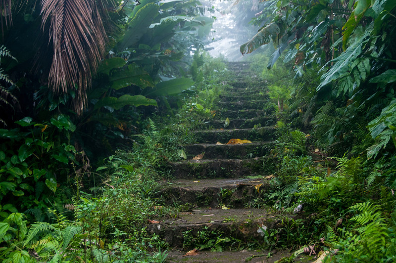 Hiking up Mt. Scenery on Saba Island