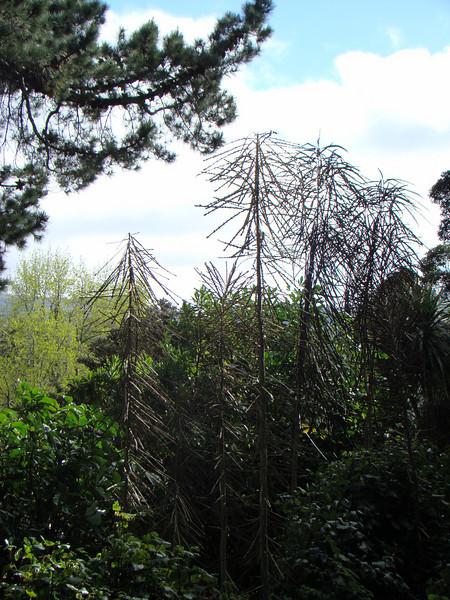 Dunedin aviaries (botanic garden)