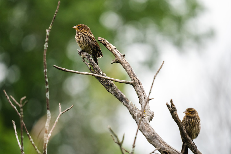 pair of finches on a bare tree branch