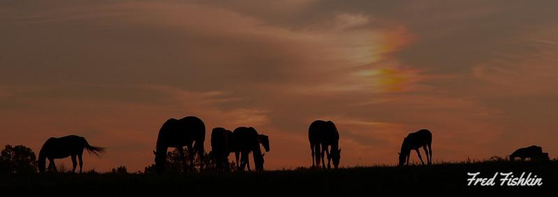 horses sunset wide.jpg