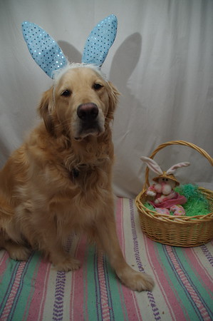 Pets and Easter