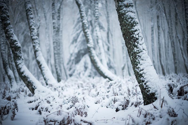 Neige forêt PDD.jpg