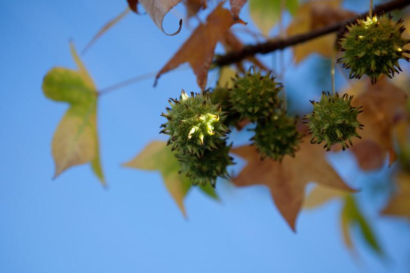 fall-3939.jpg