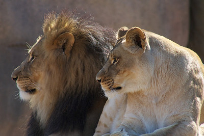 Peoria Zoo -- 10-24-11