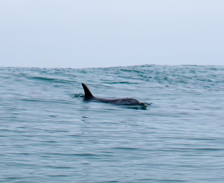 Beacons dolphins-16.jpg