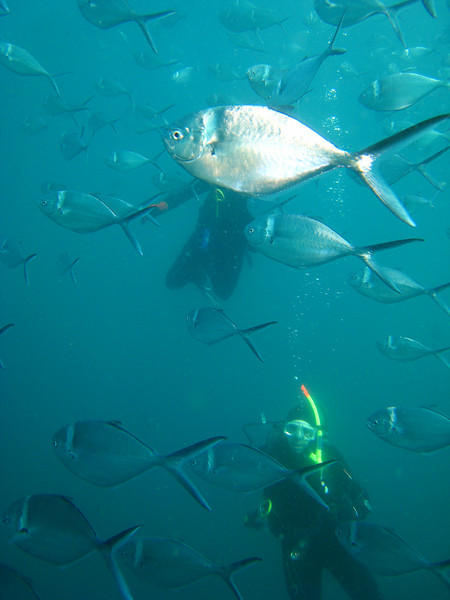 Diving in the Galapagos (202 of 392)