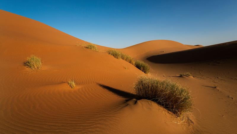 Erg Chiggaga, Southern Morocco, 2018