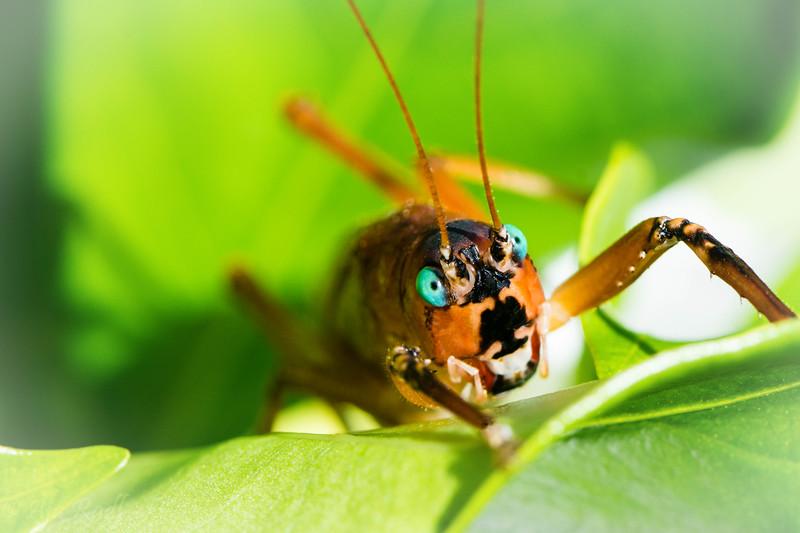 Grasshopper-.jpg