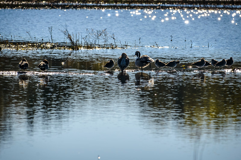 Family of Ducks.jpg