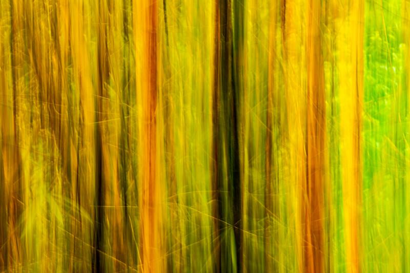 BambooAbstract.jpg