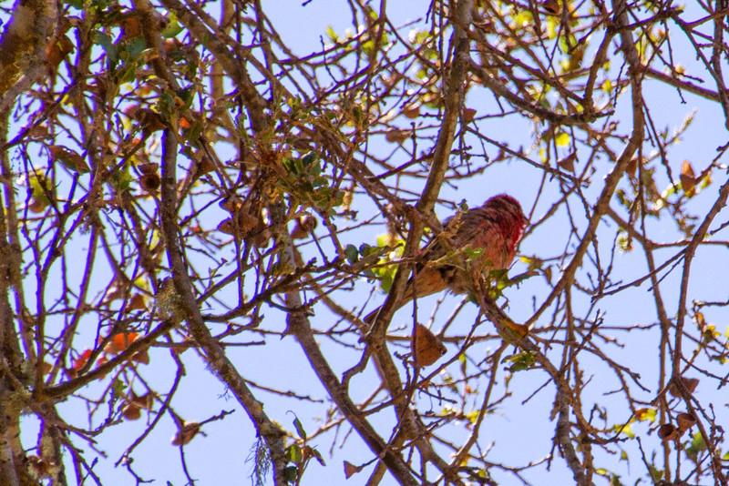 Filoli_Bird_Walk-18.jpg