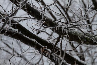 2014 Feb Ice Storm