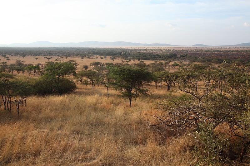 The Serengeti Plain.JPG