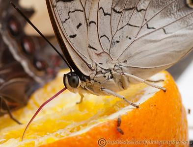 Butterfly Farm Stratford 18-06-11