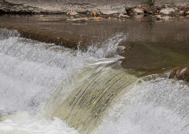 salmon upstream (33 of 48).jpg