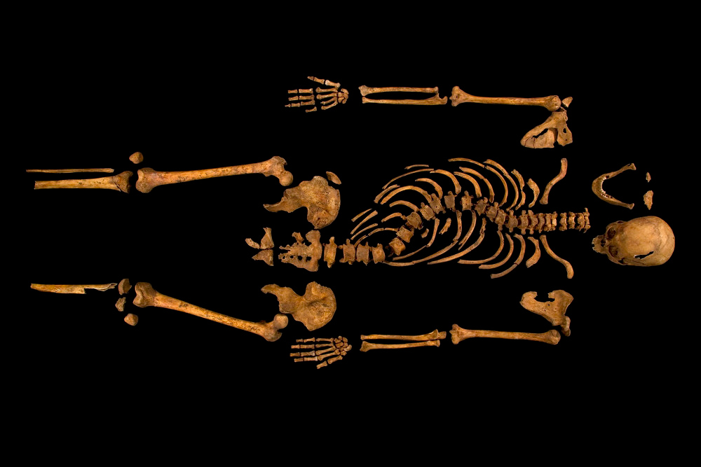 Description of . The skeleton of Richard III, which was discovered at the Grey Friars excavation site in Leicester, central England, is seen in this photograph provided by the University of Leicester and received in London on February 4, 2013. A skeleton with a cleaved skull and a curved spine entombed under a car park is that of Richard III, scientific tests confirmed, solving a 500-year-old mystery about the final resting place of the last English king to die in battle.  REUTERS/University of Leicester/Handout