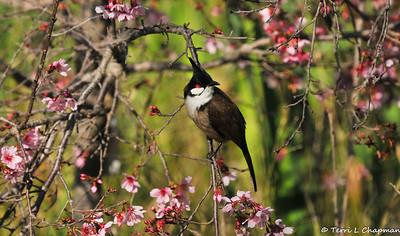 Birds of Spring 2021
