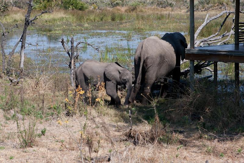 Botswana-20110720-12993.jpg