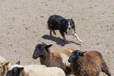 Sheep #5