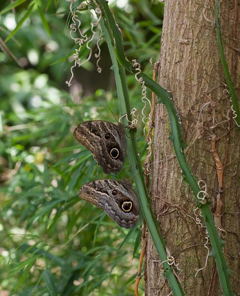 IMG_6543-2-br-butterflies-www.jpg