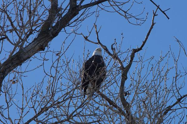 On Eagles Wings