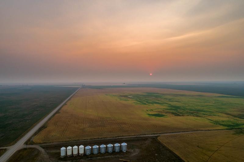 barley 45.jpg